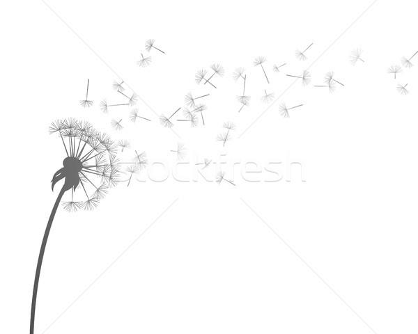 вектора одуванчик небе цветок природы жизни Сток-фото © RamonaKaulitzki