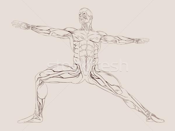 вектора человека мышцы анатомии медицинской черный Сток-фото © RamonaKaulitzki