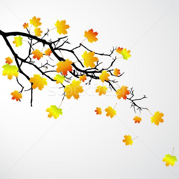 вектора филиала листьев дерево аннотация Сток-фото © RamonaKaulitzki