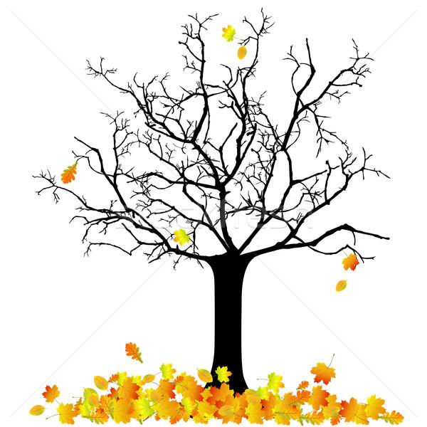 Vector autumnal tree Stock photo © RamonaKaulitzki