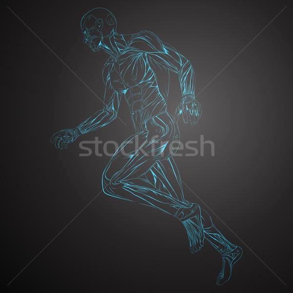 Vektor emberi izom anatómia orvosi egészség Stock fotó © RamonaKaulitzki