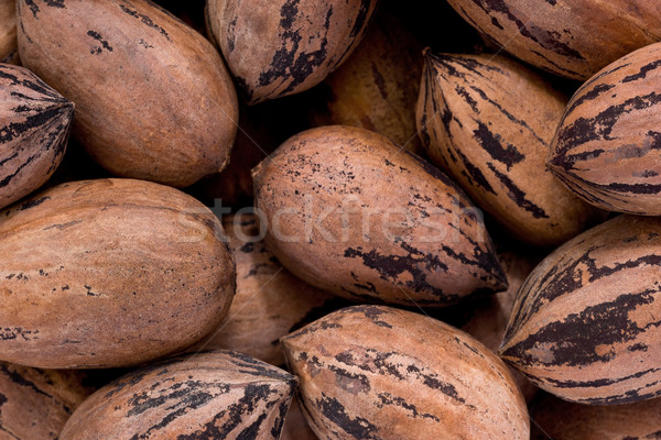 Pecans (Carya illinoinensis) Stock photo © raptorcaptor