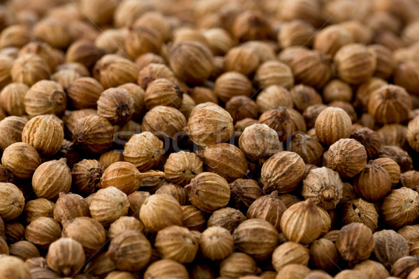 кориандр семян текстуры несколько фон приготовления Сток-фото © raptorcaptor