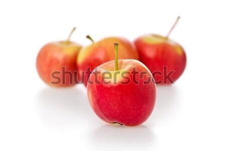 Oro manzanas cangrejo blanco Foto stock © raptorcaptor