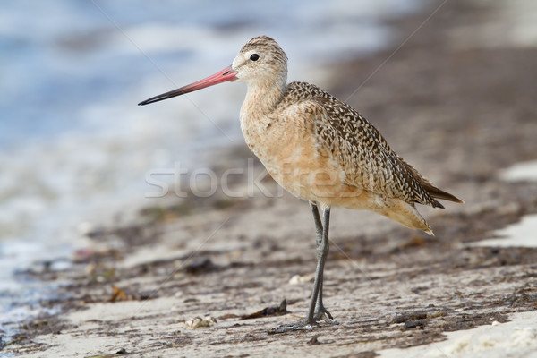 Pie playa costa naturaleza océano Foto stock © raptorcaptor