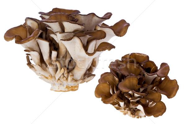 Galinha mata cogumelo cogumelos branco Foto stock © raptorcaptor