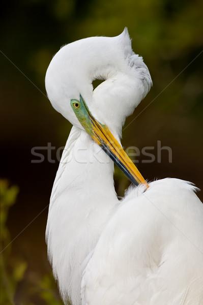 Muhteşem üreme tüyler portre Stok fotoğraf © raptorcaptor