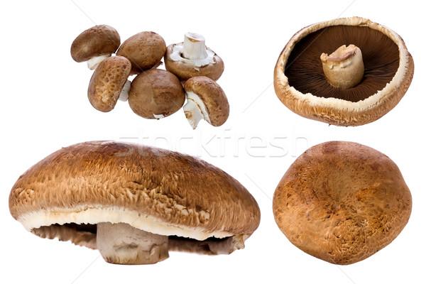 Foto d'archivio: Funghi · parecchi · alimentare · macro