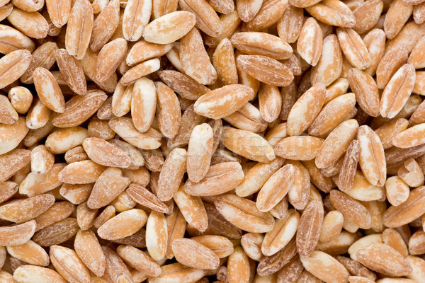 Farro Grains Stock photo © raptorcaptor