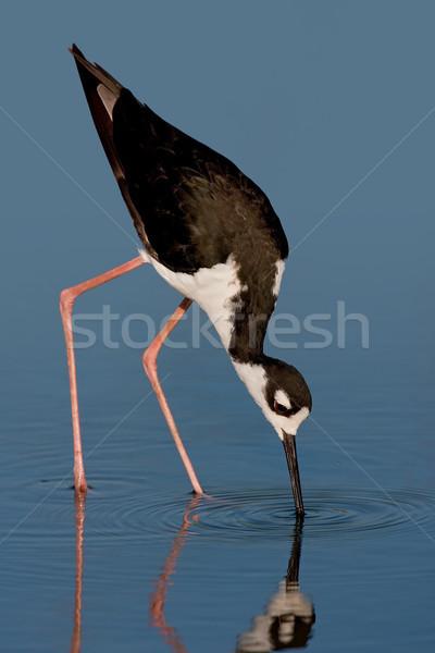 ストックフォト: 鳥 · 野生動物