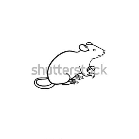 Laboratorium szczur szkic ikona Zdjęcia stock © RAStudio