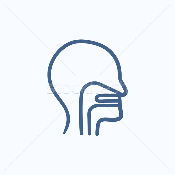 Human head with ear, nose, throat sketch icon. Stock photo © RAStudio