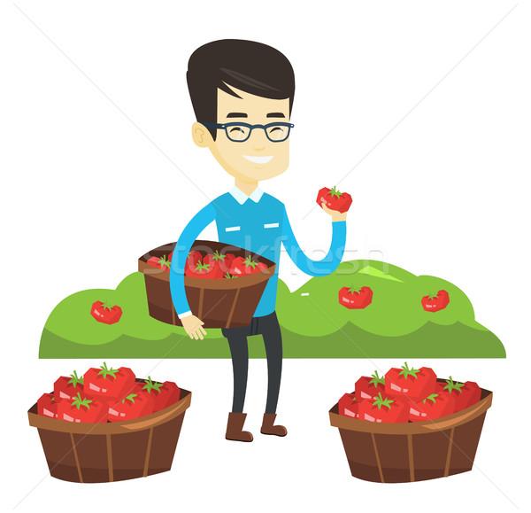 Farmer collecting tomatos vector illustration. Stock photo © RAStudio