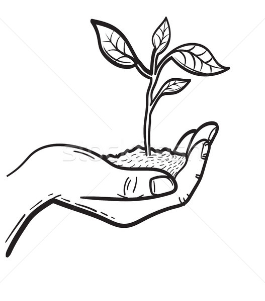 Human hand with sprout hand drawn sketch icon. Stock photo © RAStudio
