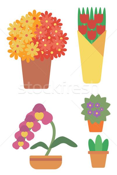 Foto d'archivio: Varietà · colorato · fiori · vettore · design · illustrazione