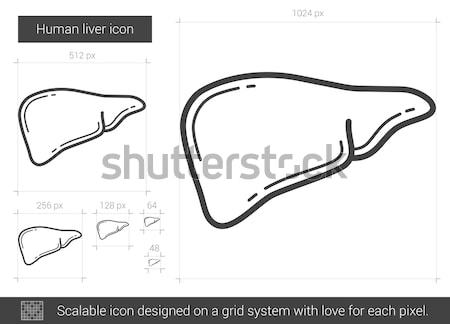 Stock photo: Human liver line icon.