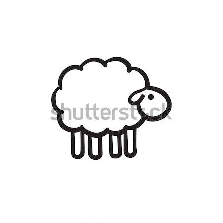 Сток-фото: овец · эскиз · икона · веб · мобильных · Инфографика