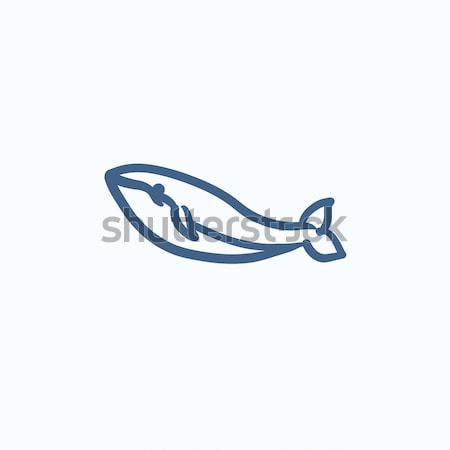Bálna rajz ikon vektor izolált kézzel rajzolt Stock fotó © RAStudio