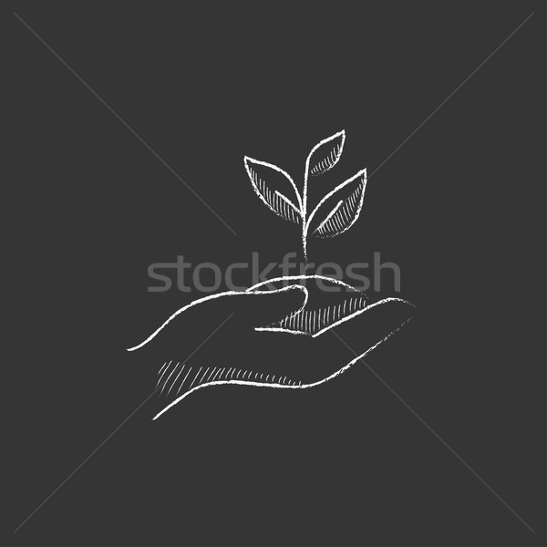 Hands holding seedling in soil. Drawn in chalk icon. Stock photo © RAStudio