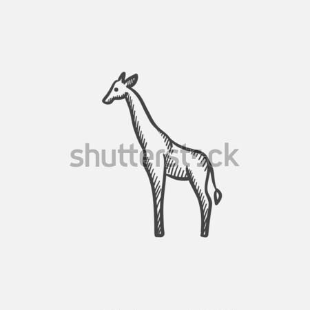 Giraffe sketch icon. Stock photo © RAStudio