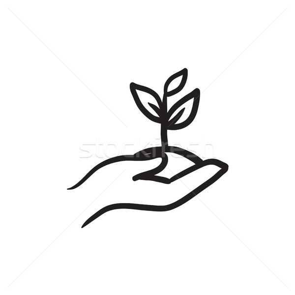 Mãos plântula solo esboço ícone Foto stock © RAStudio