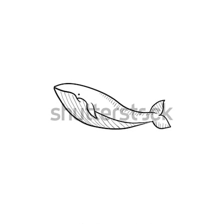 Whale sketch icon. Stock photo © RAStudio