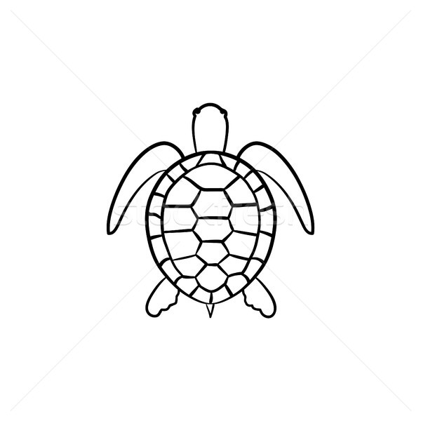 Turtle hand drawn sketch icon. Stock photo © RAStudio
