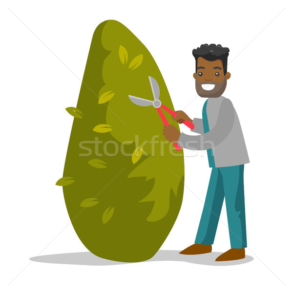 A black man gardener cutting a tree with scissors. Stock photo © RAStudio