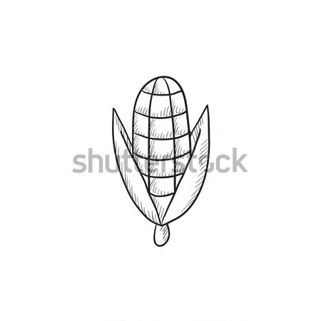 Corn sketch icon. Stock photo © RAStudio