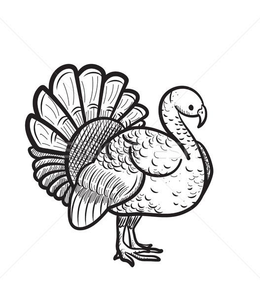 Ringraziamento giorno Turchia sketch icona Foto d'archivio © RAStudio
