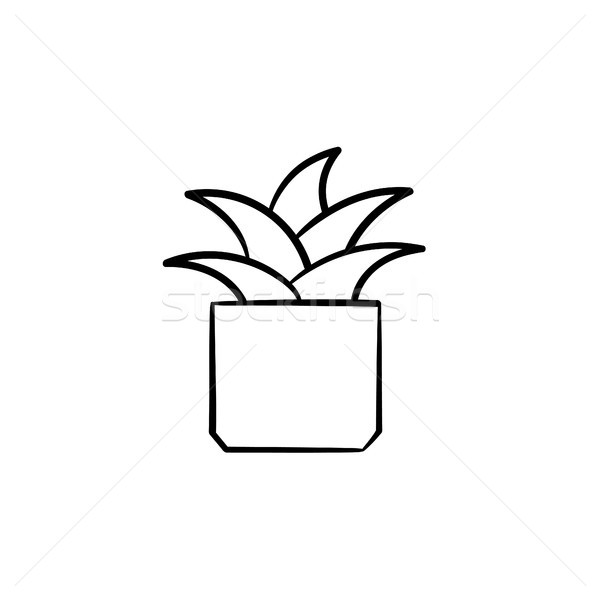 Mother-in-law tongue plant hand drawn sketch icon. Stock photo © RAStudio