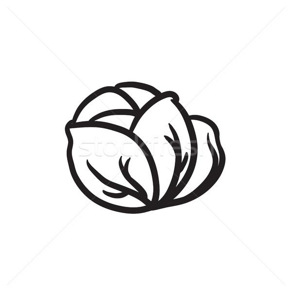 Káposzta rajz ikon vektor izolált kézzel rajzolt Stock fotó © RAStudio