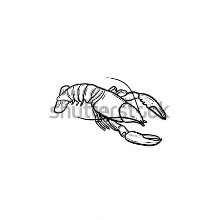 Lobster hand drawn sketch icon. Stock photo © RAStudio