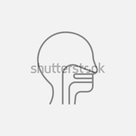 Emberi fej fül orr torok rajz Stock fotó © RAStudio