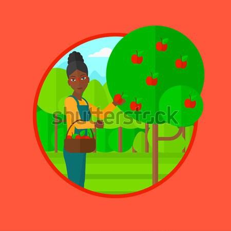 Farmer collecting apples vector illustration. Stock photo © RAStudio