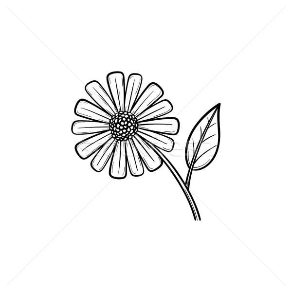 Százszorszép virág kézzel rajzolt rajz ikon skicc Stock fotó © RAStudio