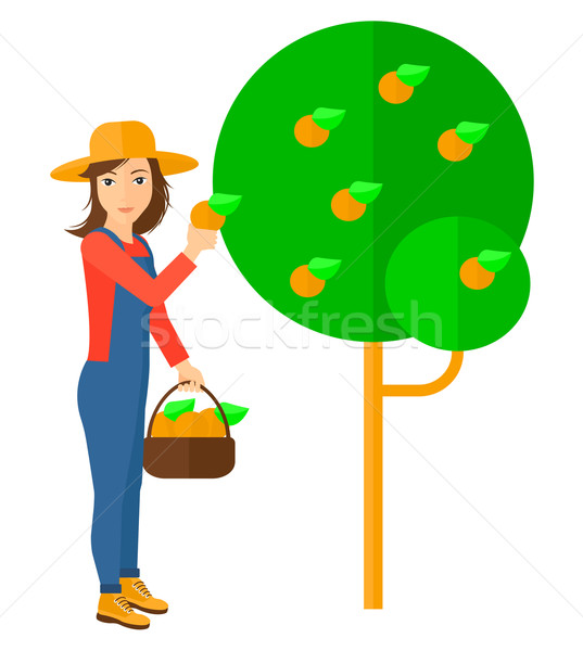 農家 オレンジ バスケット ベクトル ストックフォト © RAStudio