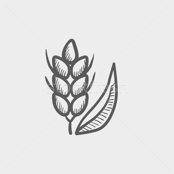 Beans sketch icon Stock photo © RAStudio
