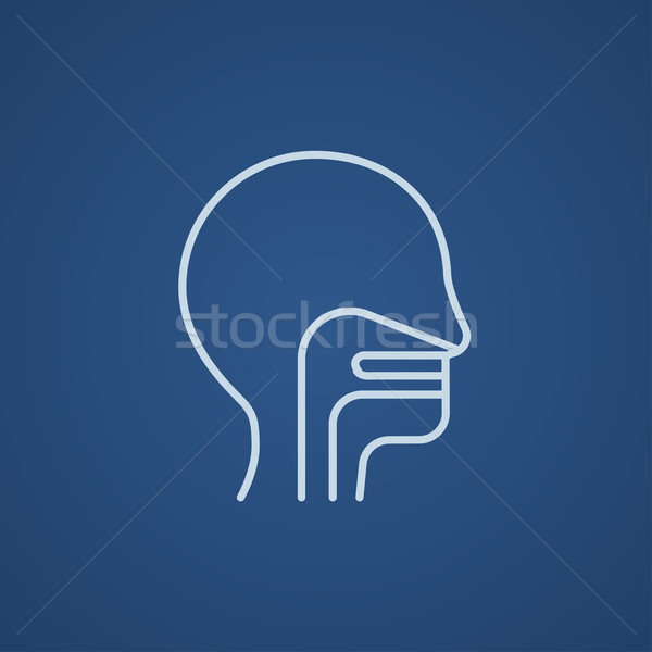 Stock photo: Human head with ear, nose, throat system line icon.