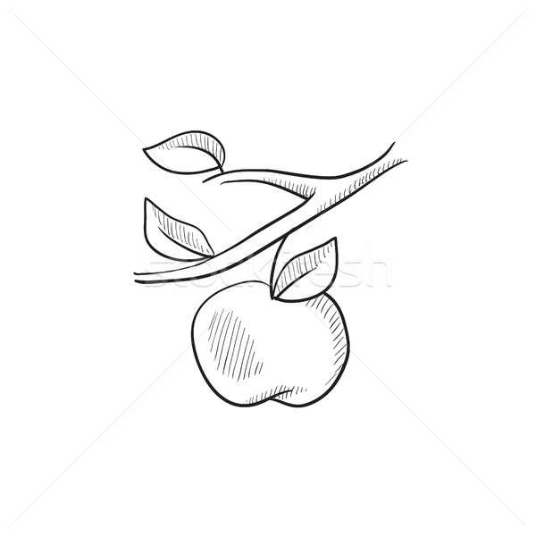Manzana cosecha boceto icono vector aislado Foto stock © RAStudio