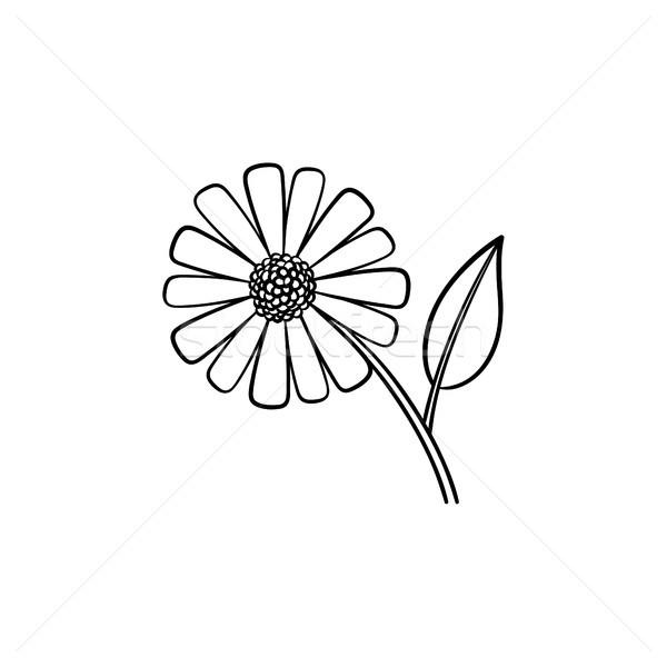 Daisy flower hand drawn sketch icon. Stock photo © RAStudio