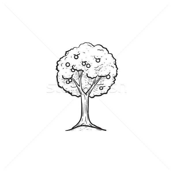 árvore frutífera esboço ícone vetor Foto stock © RAStudio