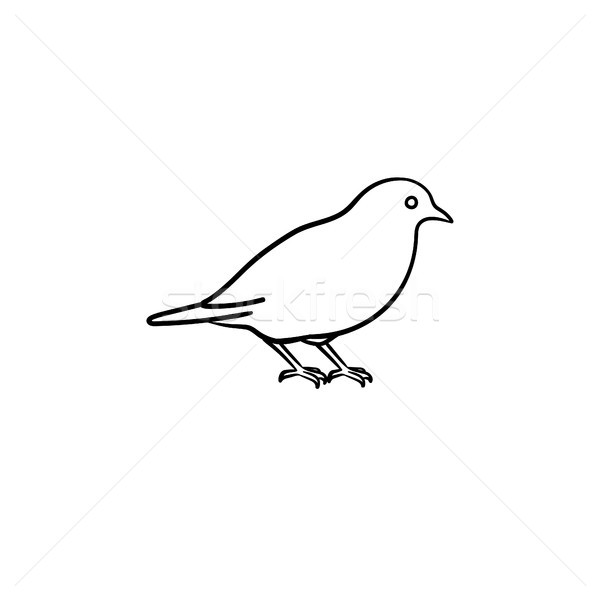 Bird hand drawn sketch icon. Stock photo © RAStudio