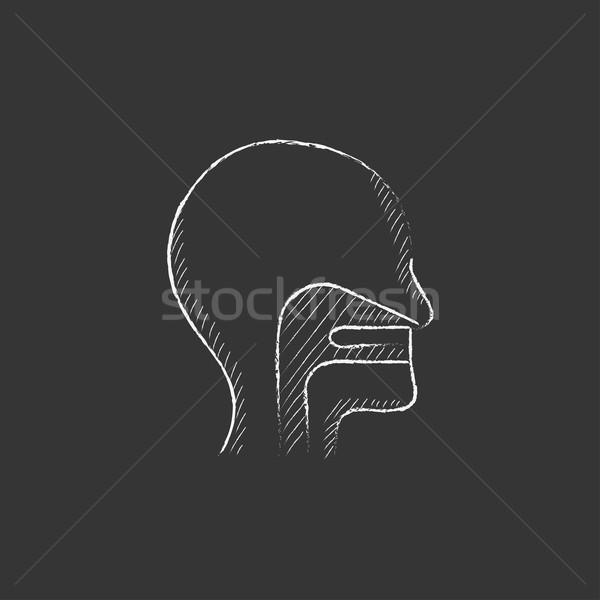 Humanismo cabeça ouvido nariz garganta Foto stock © RAStudio