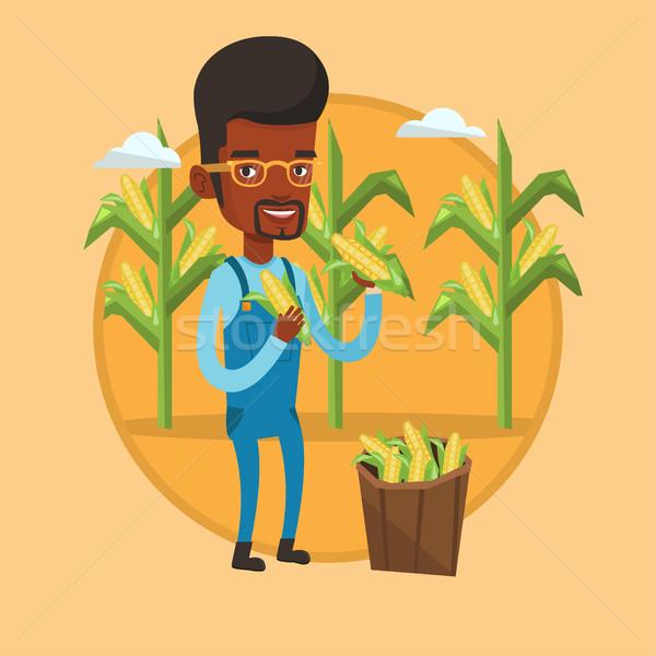Farmer collecting corn vector illustration. Stock photo © RAStudio