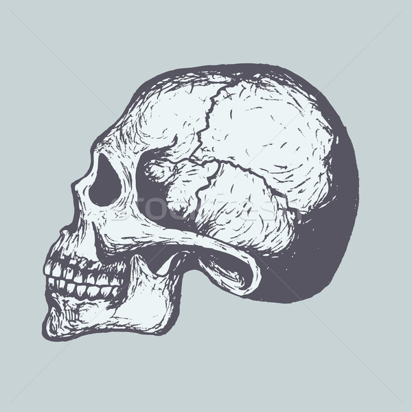 Human Skull Stock photo © RAStudio