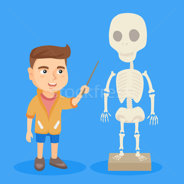 Caucasian schoolboy studying the human skeleton. Stock photo © RAStudio