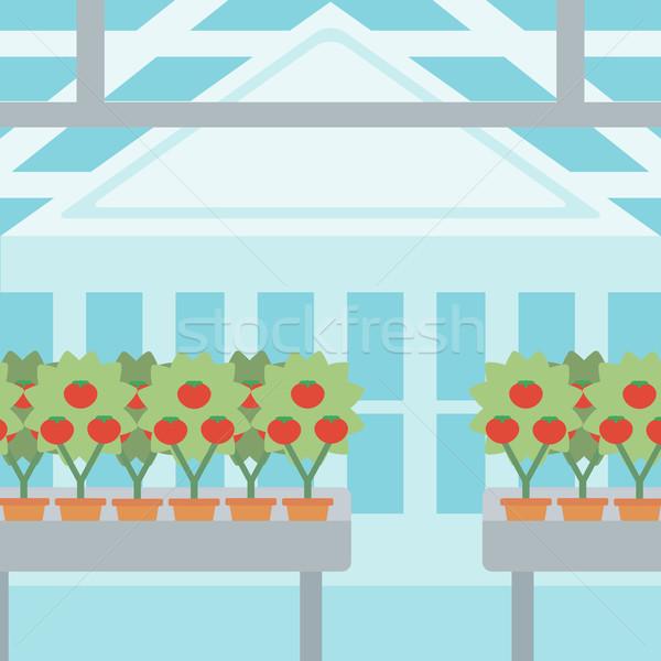 Background of tomatoes in the greenhouse. Stock photo © RAStudio