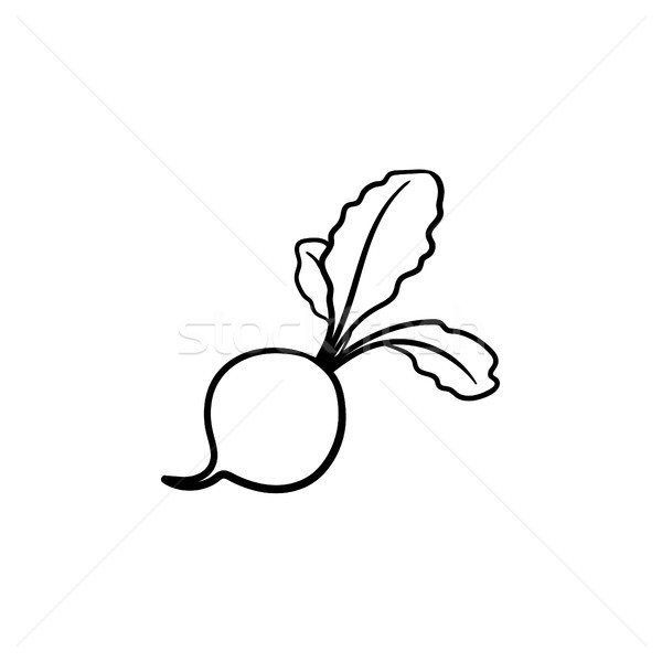 Turnip hand drawn sketch icon. Stock photo © RAStudio
