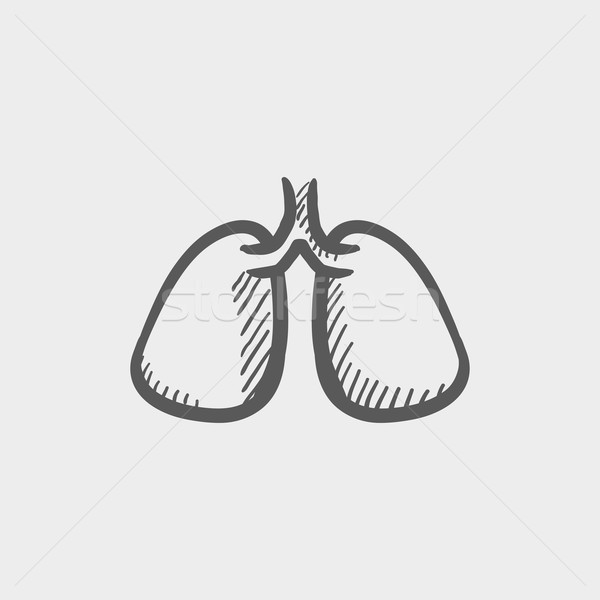 Stock photo: Lungs sketch icon